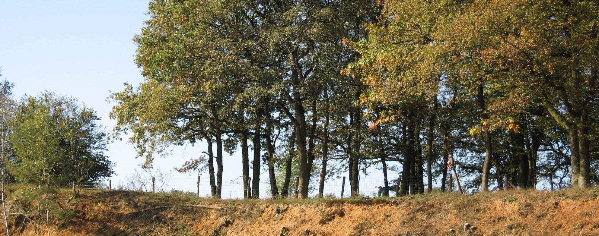 Bomen - Bos